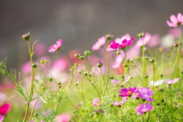 Bellissimo sfondo colorato fiore.