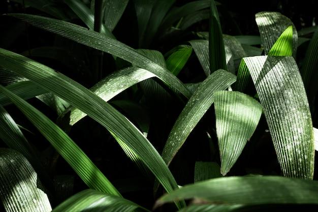 Bellissimo sfondo di foglie esotiche