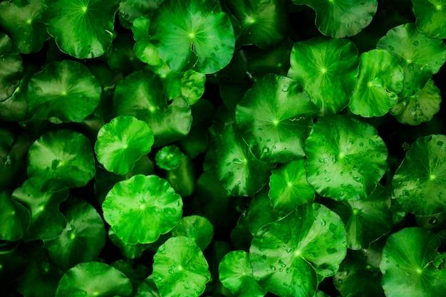 Bellissimo sfondo verde foglia