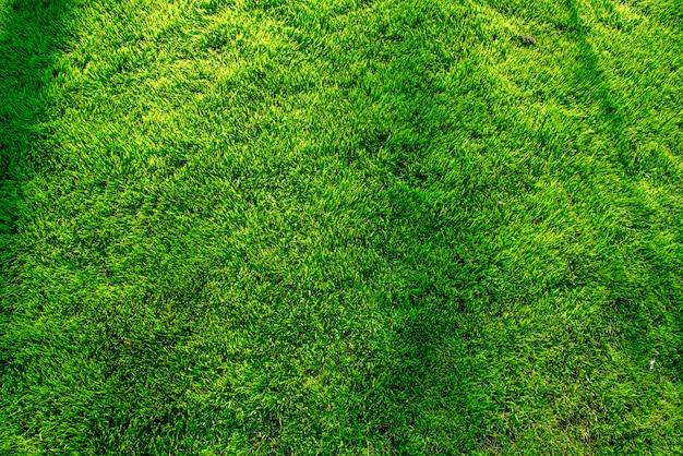 Bellissimo sfondo verde prato