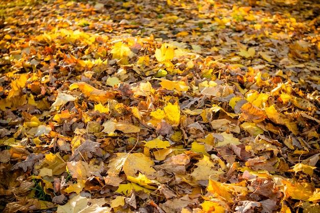 Bellissimo tempo autunnale foglie autunnali colorate. sfondo autunnale.