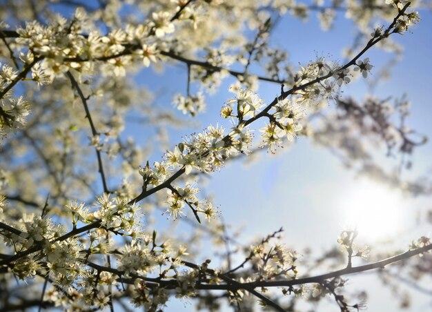 Bello albero che fiorisce in primavera