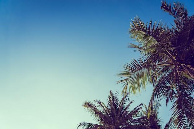 Bello albero del cocco del angolo basso con il fondo del cielo blu