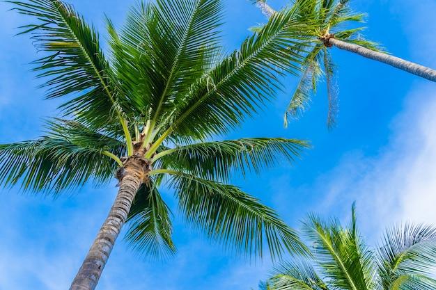 Bello albero del cocco su cielo blu