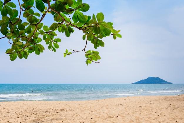 Bello albero sulla priorità bassa del cielo blu, c'è montagna nel mare vicino alla spiaggia