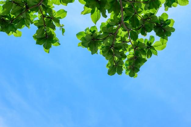 Bello albero sulla priorità bassa del cielo blu, parte superiore dell'albero