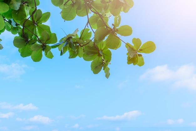 Bello albero sulla priorità bassa del cielo blu