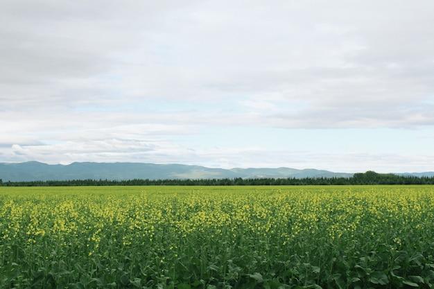 Bello campo aperto verde con le montagne nei precedenti e nel cielo stupefacente