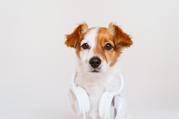 Bello cane di jack russell che si trova sul letto che ascolta la musica sulla cuffia avricolare. casa, interni, musica e stile di vita