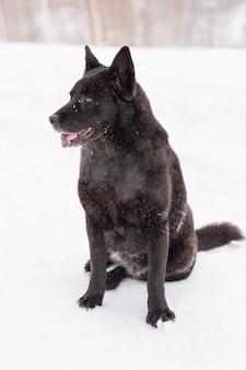 Bello cane nero che si siede nella neve sul campo nevoso nella foresta di inverno
