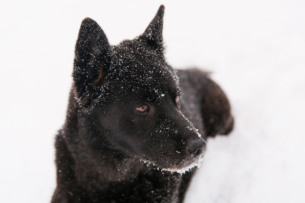 Bello cane nero che si trova nel campo nevoso nella foresta di inverno