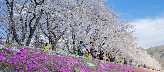Bello cherry blossom rosa che fiorisce nel lago kawaguchiko