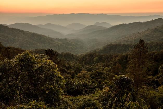 Bello cielo di alba sopra la foresta e la montagna tropicali