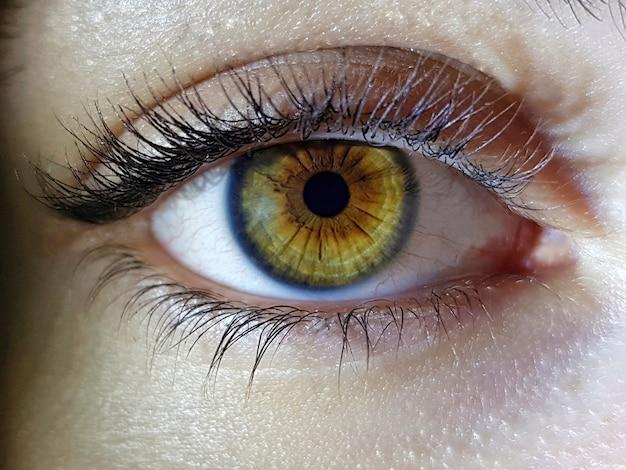 Bello colpo a macroistruzione del primo piano degli occhi profondi dell'essere umano femminile