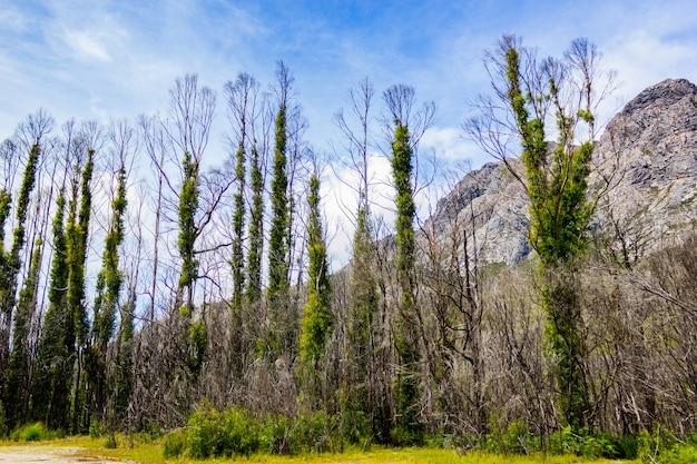 Bello colpo degli alberi che crescono accanto alle formazioni rocciose nelle montagne un giorno soleggiato