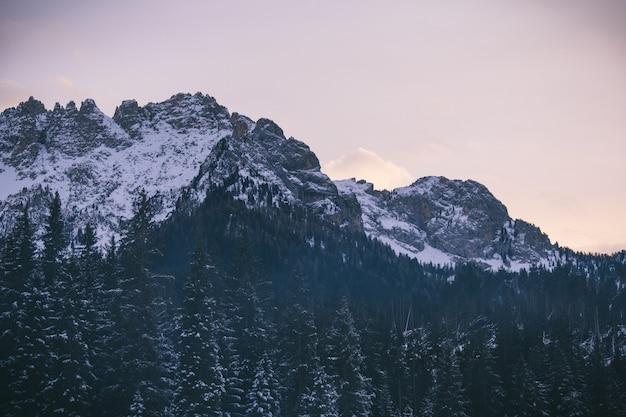 Bello colpo degli alberi nevosi vicino alle montagne nevose con il chiaro cielo