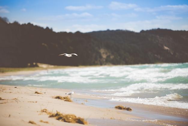 Bello colpo dei gabbiani su una riva della spiaggia con uno sfondo sfocato di giorno