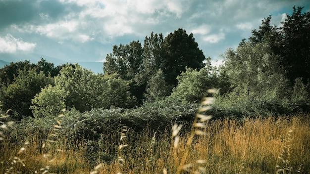 Bello colpo del campo erboso asciutto vicino agli alberi sotto un bello cielo