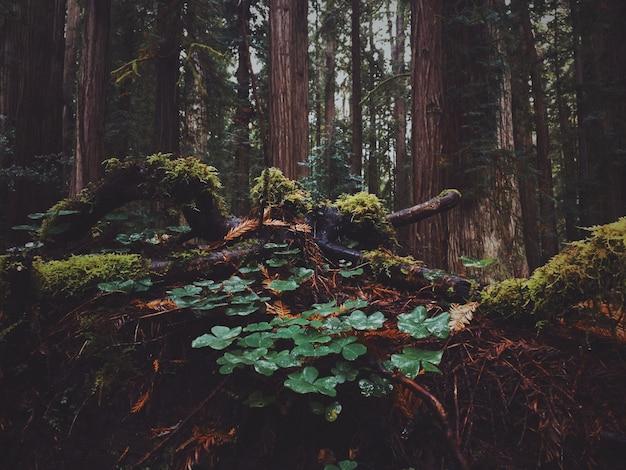 Bello colpo delle foglie nella foresta con muschio che cresce su loro in un giorno piovoso