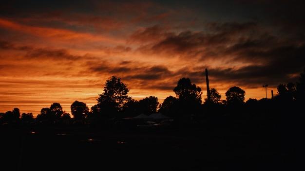 Bello colpo delle siluette degli alberi sotto il cielo arancione scuro all'alba - concetto di orrore