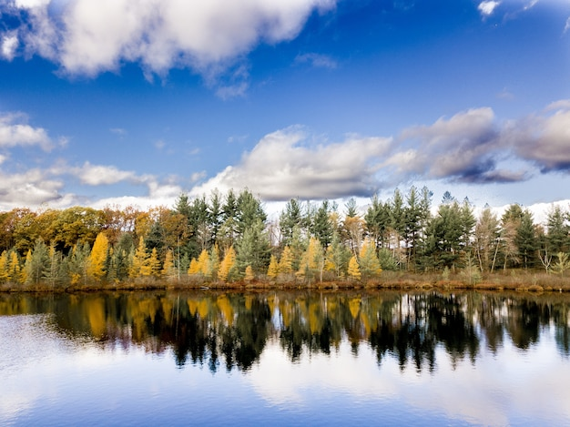 Bello colpo di acqua che riflette gli alberi sulla riva sotto un cielo nuvoloso blu