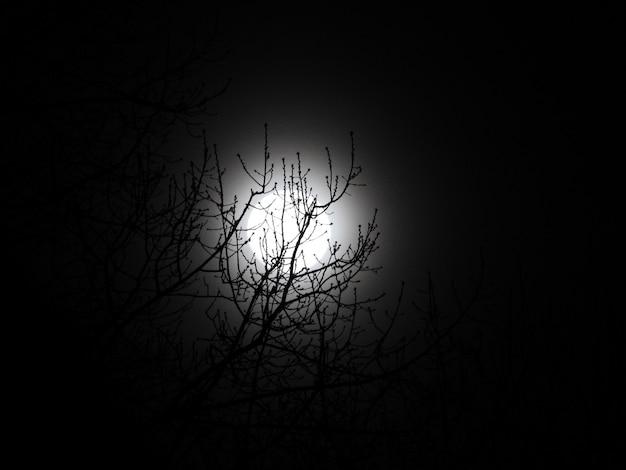 Bello colpo di angolo basso di un albero nudo e della luna alla notte