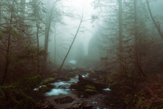 Bello colpo di un lago in una foresta in un terreno roccioso