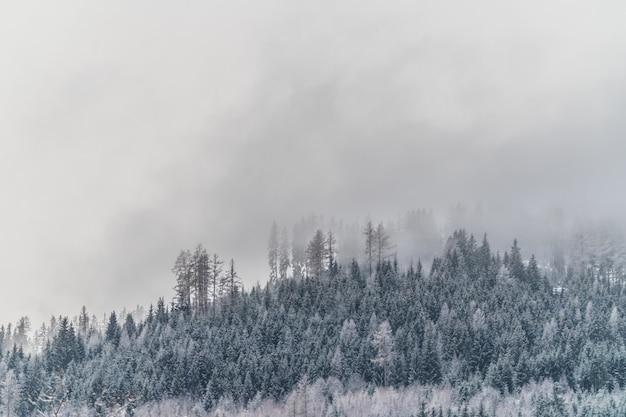 Bello colpo di una collina nevosa con piante e alberi durante un tempo nebbioso