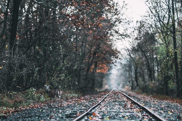 Bello colpo di una ferrovia in una foresta durante la caduta