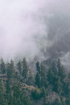 Bello colpo di una foresta nebbiosa di sera