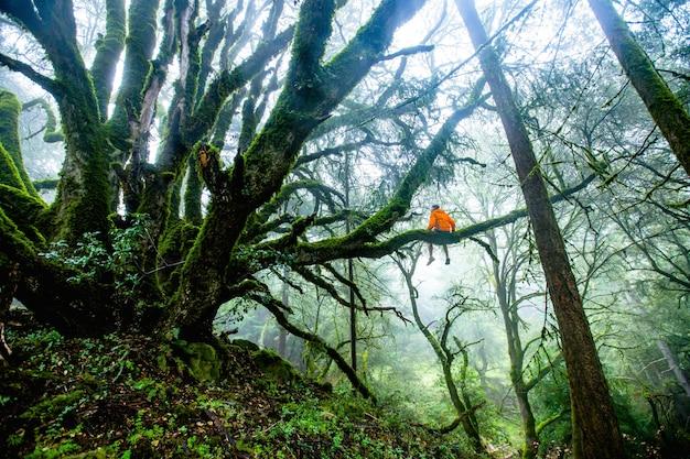 Bello colpo di una persona che si siede su un ramo di albero lungo nella foresta durante il giorno