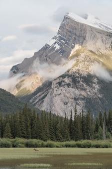 Bello colpo verticale delle montagne circondate dai pini verdi