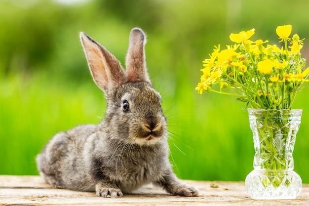 Bello coniglio grigio divertente su un verde naturale