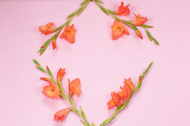 Bello fiore arancio di gladiolo su fondo rosa