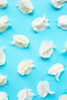 Bello fiore bianco della buganvillea su fondo blu.