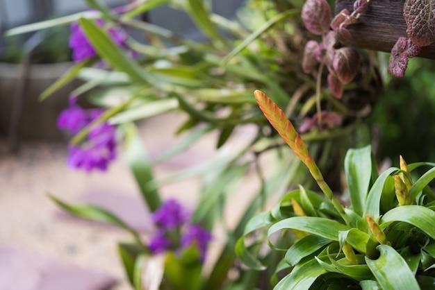 Bello fiore di guzmania in giardino verde fresco