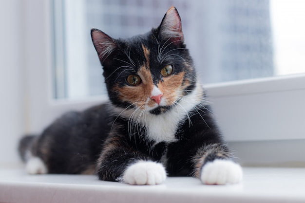 Bello gatto colorato che si siede su un davanzale