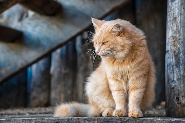 Bello gatto dello zenzero che guarda al lato