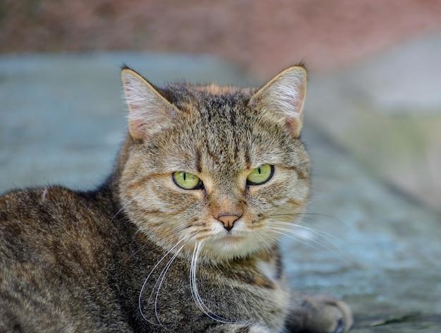 Bello gatto di via grigio all'aperto