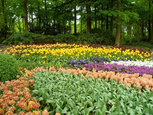 Bello giardino della primavera con i fiori di fioritura multicolori, paesi bassi
