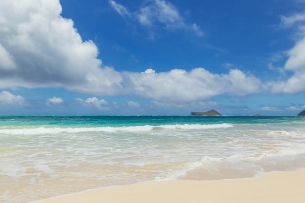 Bello litorale alla spiaggia sabbiosa tropicale nell'isola di oahu, hawai