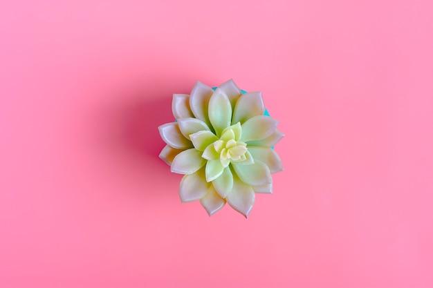 Bello modello del succulente del fiore verde isolato sul fondo di colore rosa