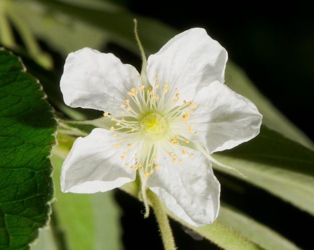 Bello modello di fiore nel giardino di primavera