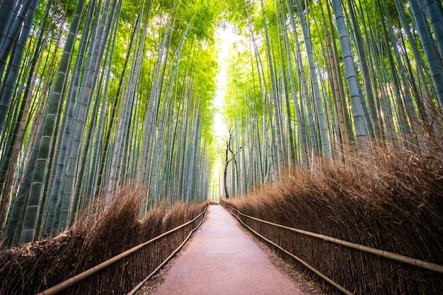 Bello paesaggio del boschetto di bambù nella foresta a arashiyama kyoto