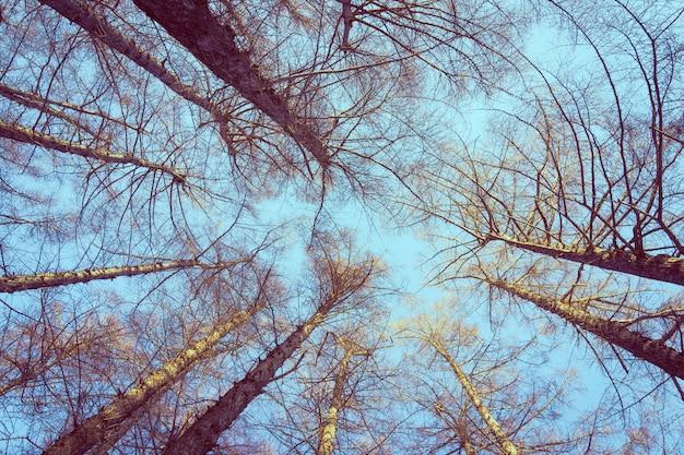 Bello paesaggio dell'albero basso e ramo di angelo con la priorità bassa del cielo