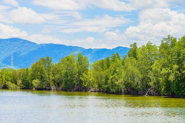 Bello paesaggio della foresta della mangrovia in tailandia