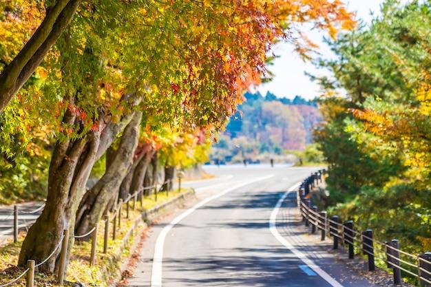 Bello paesaggio della strada nella foresta con l'albero di acero