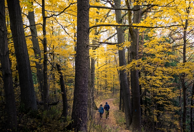 Bello paesaggio di autunno di caduta a toronto