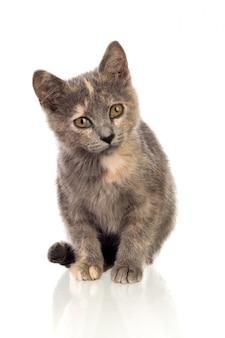 Bello piccolo gatto marrone che osserva