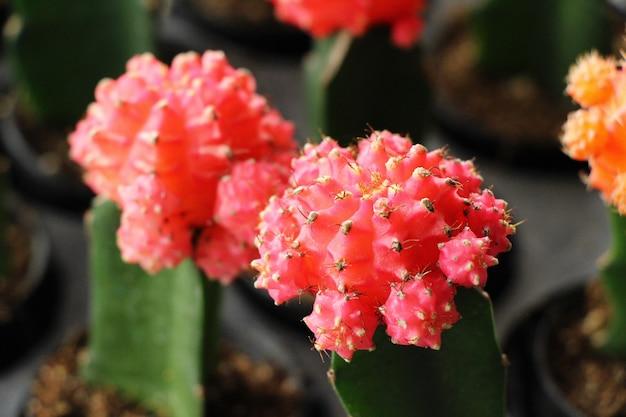 Bello piccolo il cactus nella pentola